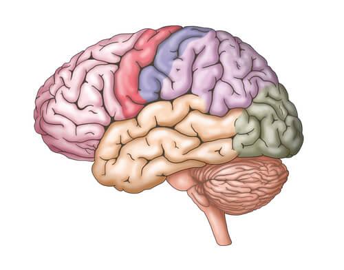 Cerebro de colores representando las inteligencias múltiples