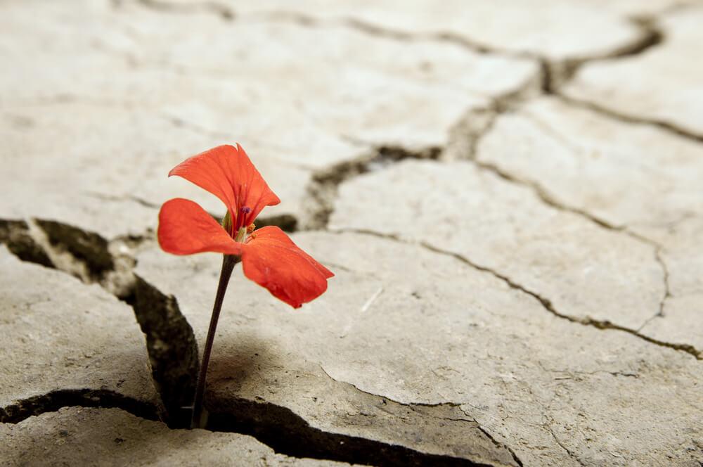 flor entre grietas representando simbolizando a las personas rencorosas