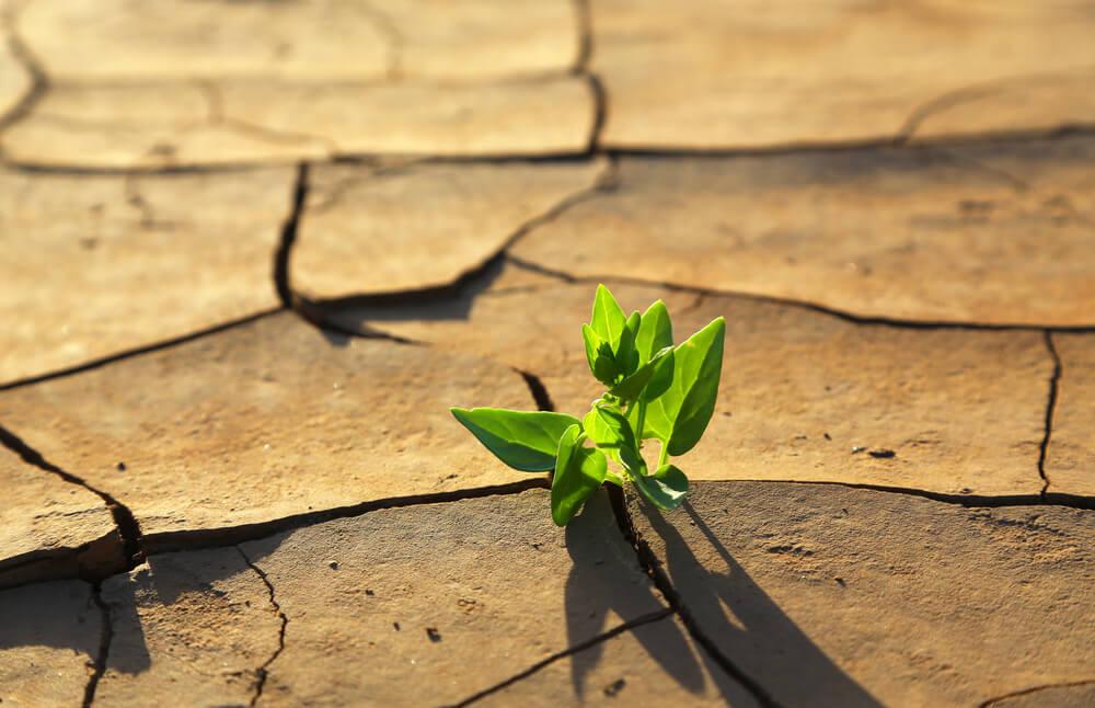 planta aflorando en terreno seco