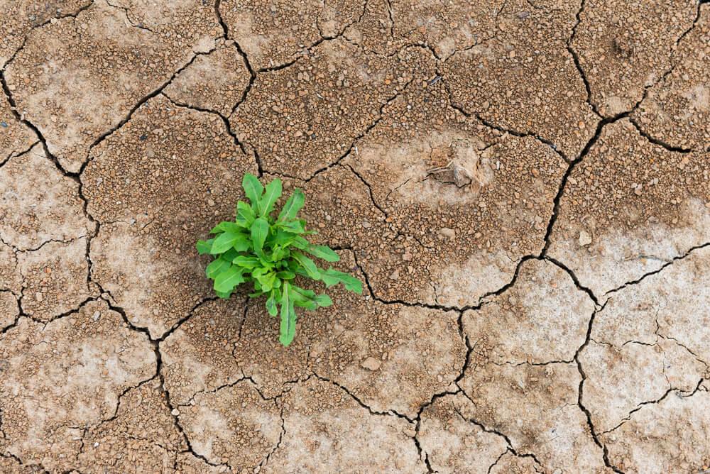Resiliencia la capacidad de renacer luego de una adversidad