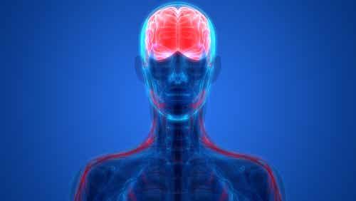 Las neuronas espejo donde se reflejan los sentimientos de los demás