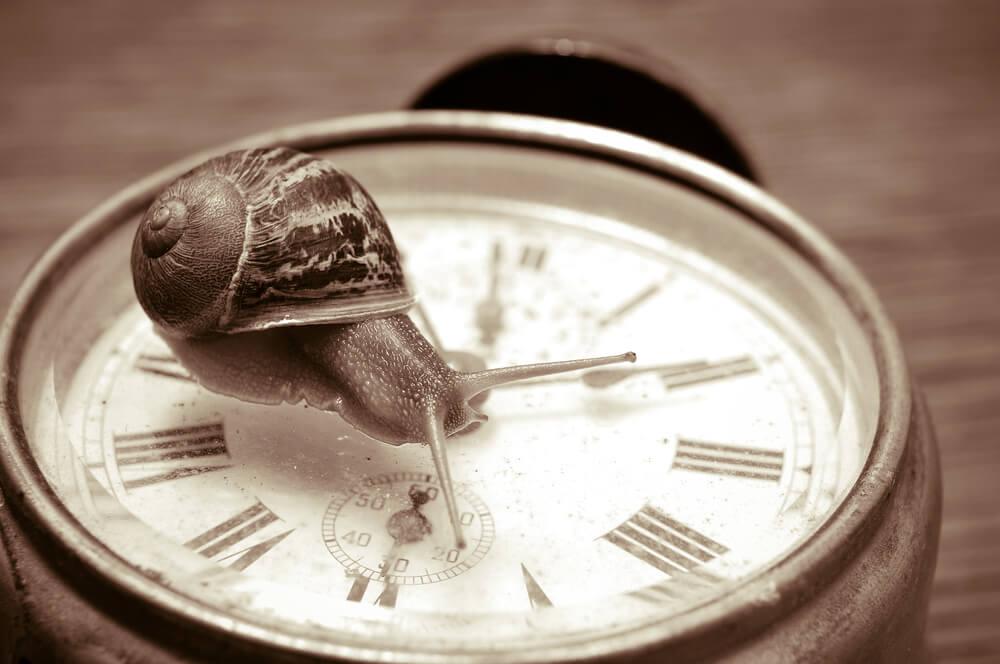 Caracol simbolizando el movimiento slow