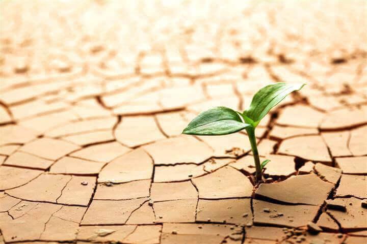 Planta en el desierto superando adversidades