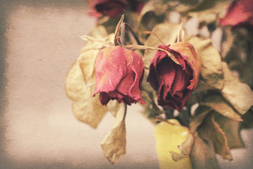 Olvidar un gran amor