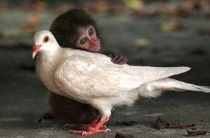 Animales dándose caricias