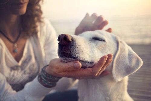 Perro con los ojos cerrados mientras recibe caricias