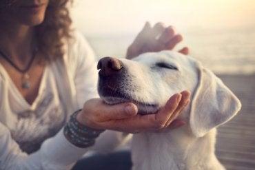 Tu mejor amigo también tiene conciencia