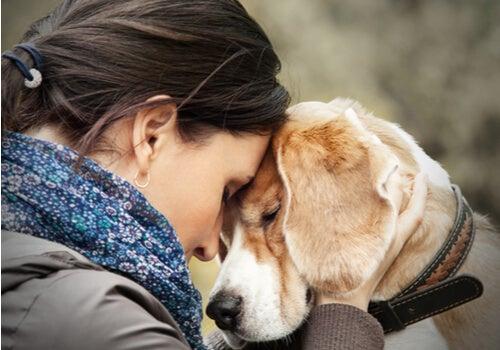 Las mascotas, pequeños maestros en apoyo emocional