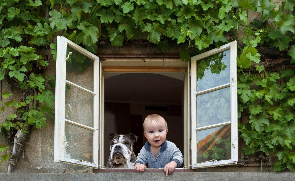 Niño en la ventana con su perro