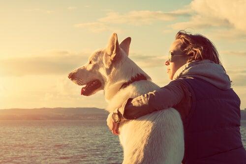 Amo buscando apoyo emocional en su mascota