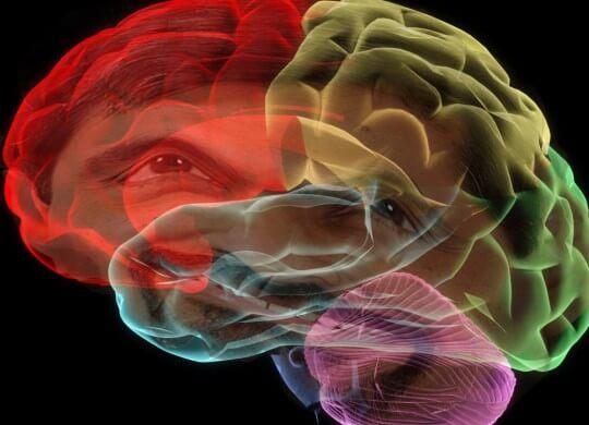 Cerebro en el que se contiene el hipocampo