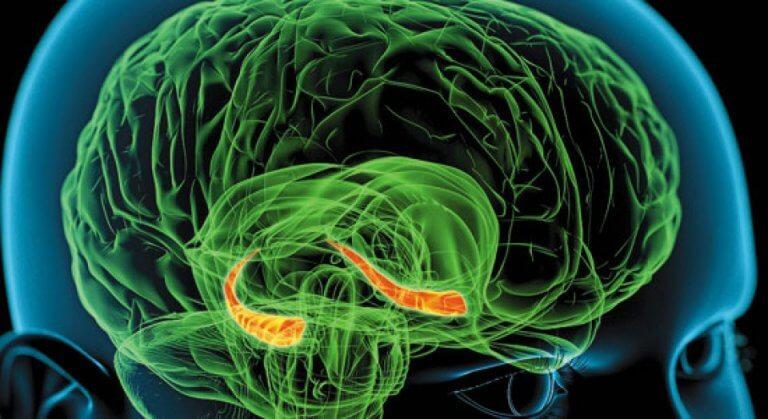 Hipocampo señalado en el cerebro de una persona