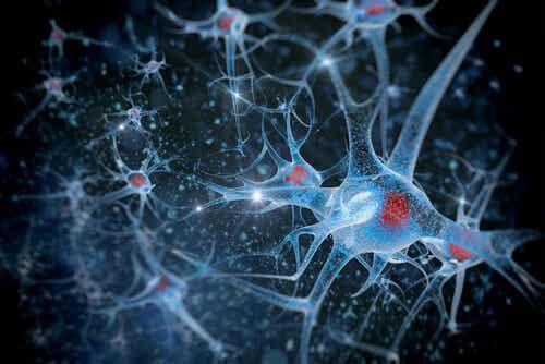 El hipocampo, artesano de la memoria emocional