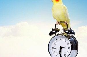 Cuatro cosas que las personas con éxito hacen en las primeras horas del día
