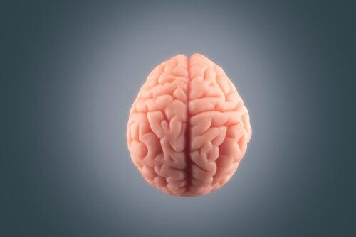 Cerebro humano en fondo gris