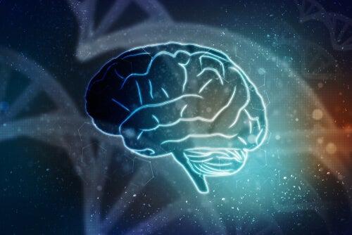 Mitos sobre el funcionamiento del cerebro y el aprendizaje