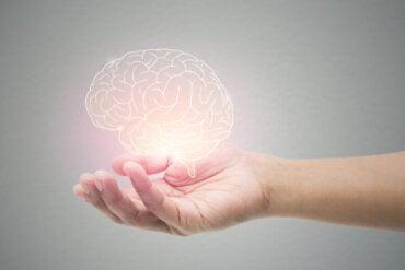 La teoría de la codificación predictiva del cerebro