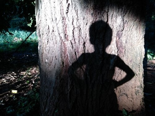 Sombra niño en árbol