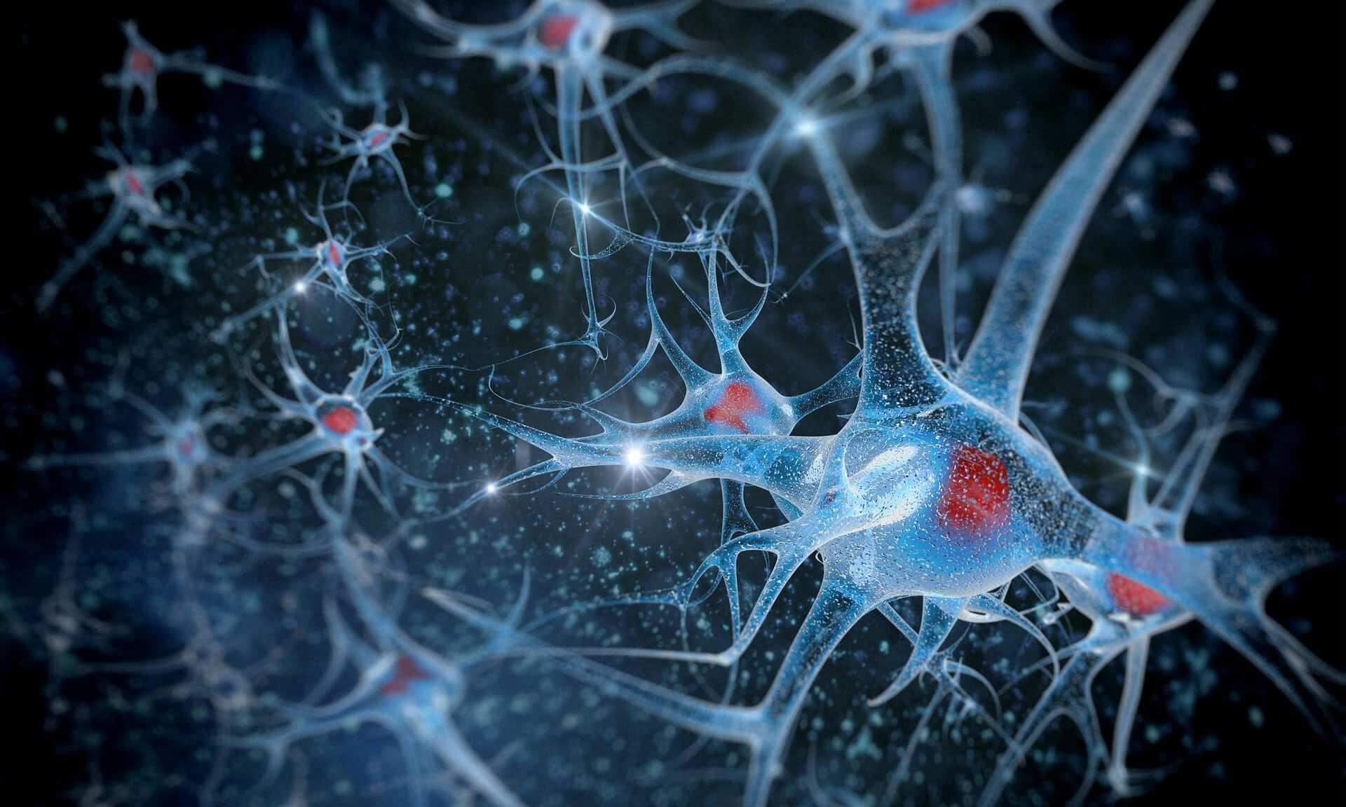 ¿Es verdad que disponemos de un segundo cerebro?