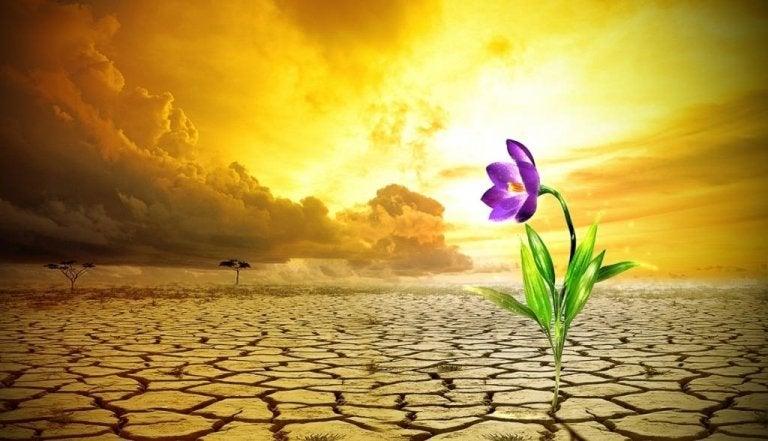Cinco claves para desarrollar tu resiliencia