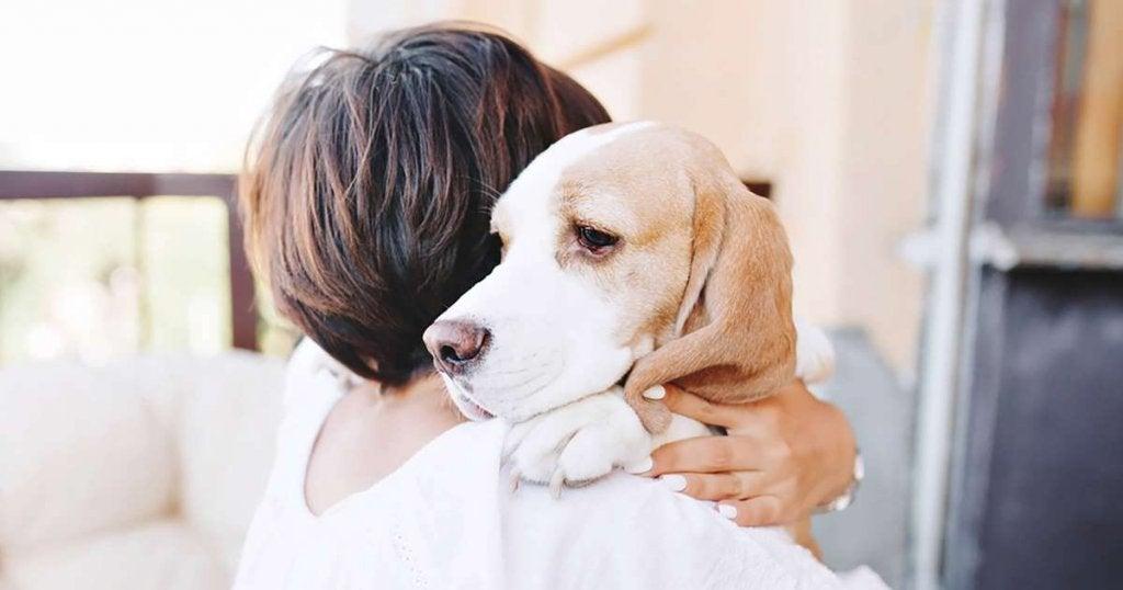 Abrazo a un perro
