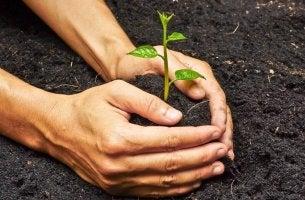 Ayudar a crecer