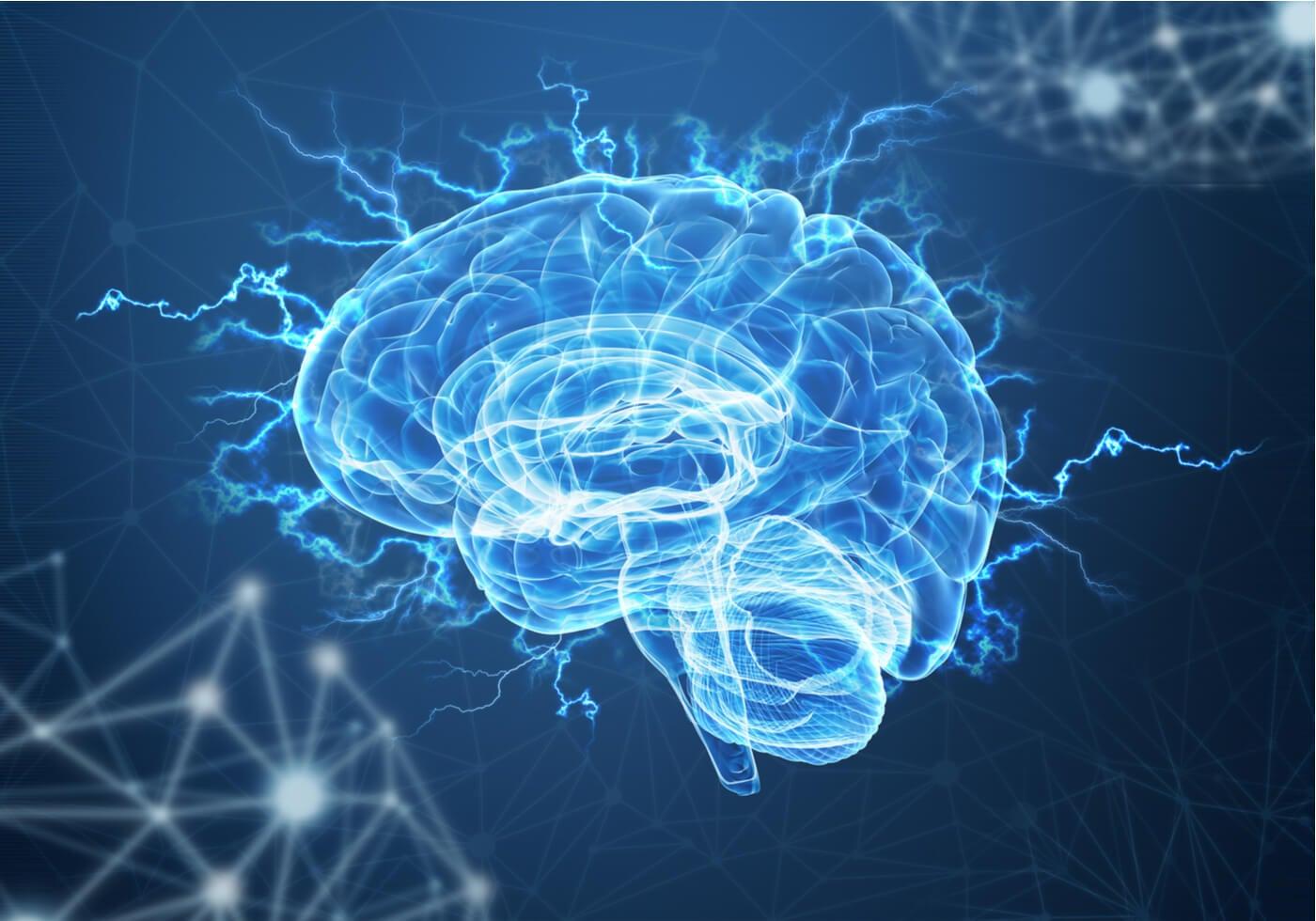Cerebro evidenciando la respuesta del cortisol al despertar