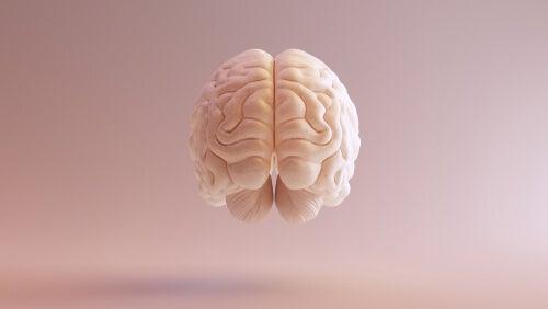 Cerebro suspendido en el aire