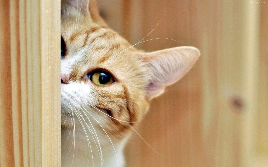 La curiosidad por la que sobrevivió el gato