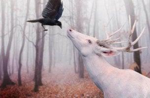 Cuervo y arce representando lo intuitivo y lo racional