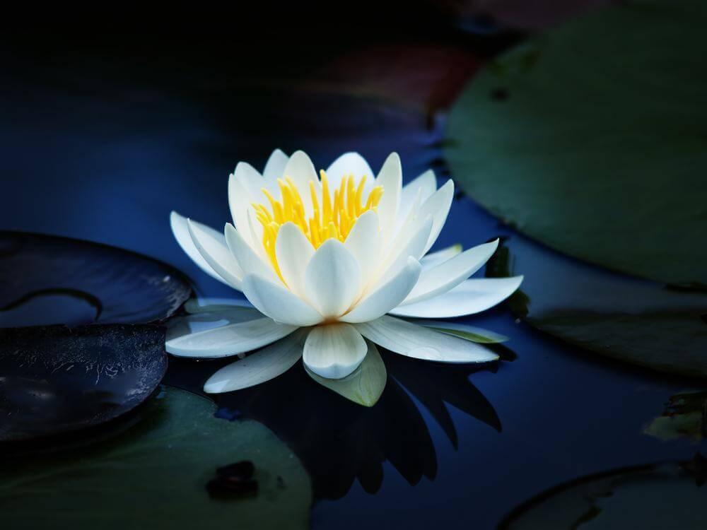 Si el amor es una planta, la libertad es el agua
