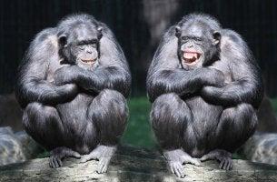 Beneficios de la risa para la gestión del estrés_shutterstock_145207369