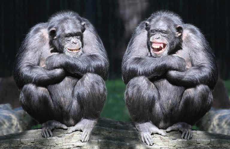 ¿Sabes cómo nos ayuda la risa a gestionar el estrés?