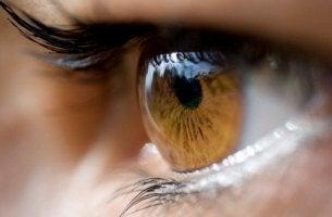 ¿Qué trasmite nuestro color de ojos?