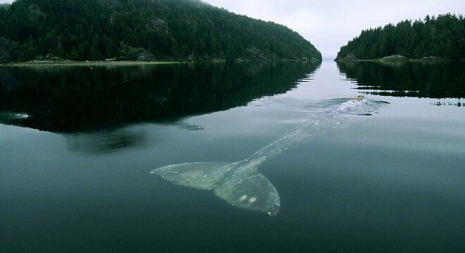La historia de la ballena más triste