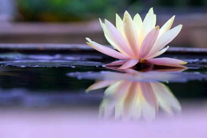 El Mindfulness y la meditación