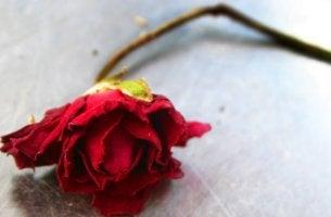 Rosa simbolizando una ruptura de pareja
