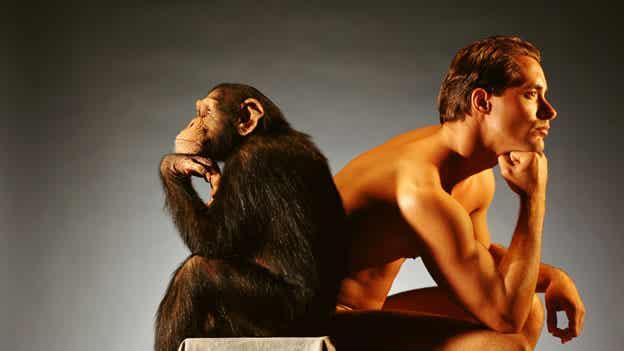 ¿Sabes a qué animales nos parecemos más?