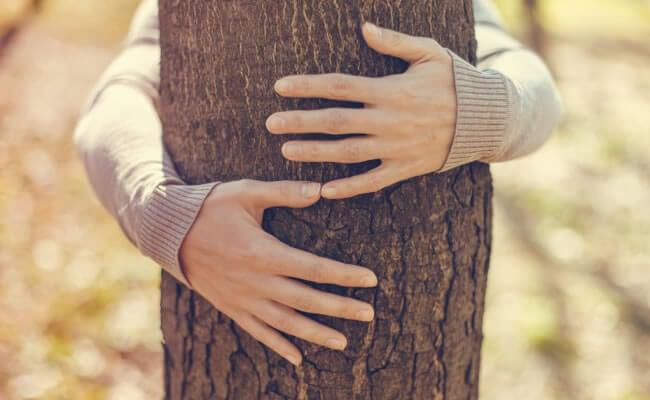 Abrazar árbol