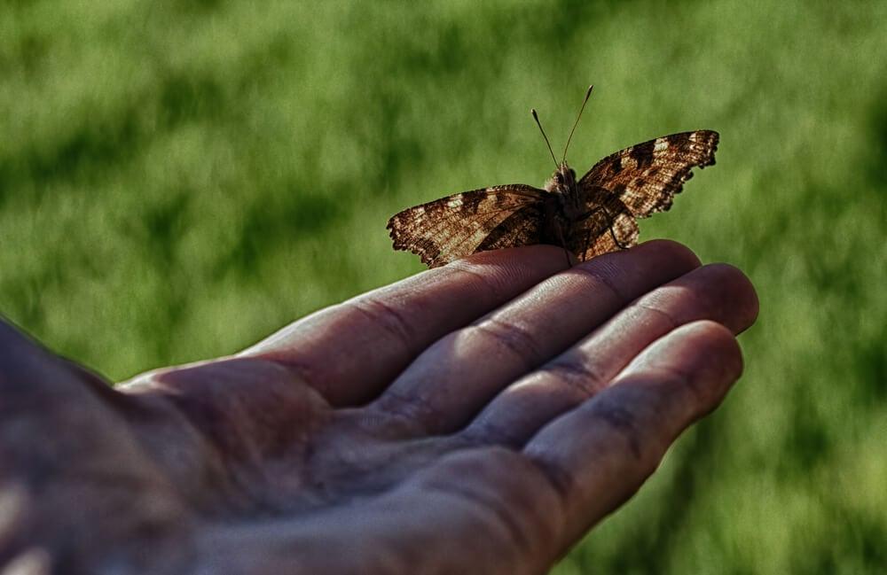 ¿Qué no hacer por los demás? (La historia del hombre y la mariposa)