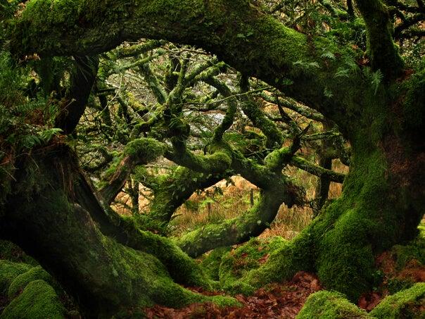 Mi espacio de soledad, mi refugio verde