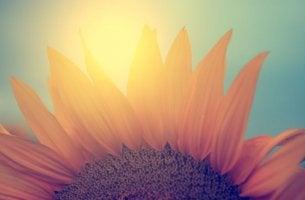 Flor que simboliza empezarde cero