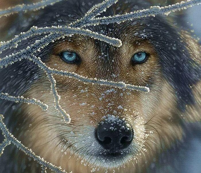 """El """"lobo"""" de mis vacíos: ¿Cómo afrontar todas las pérdidas?"""