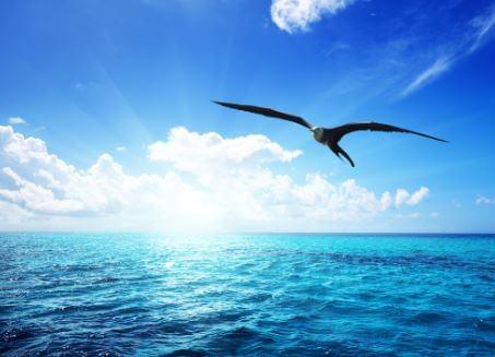 ¡Qué nadie te diga cómo, ni dónde has de volar!