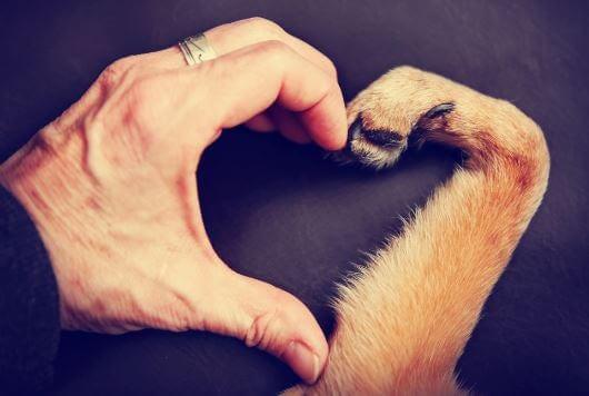 Corazón con la mano de un hombre y la pata de un perrro