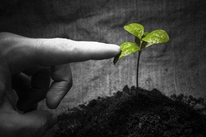 mano tocando planta simbolizando las inteligencias múltiples de Gardner