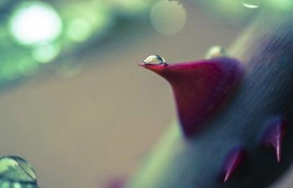 Gota de agua sobre una flor