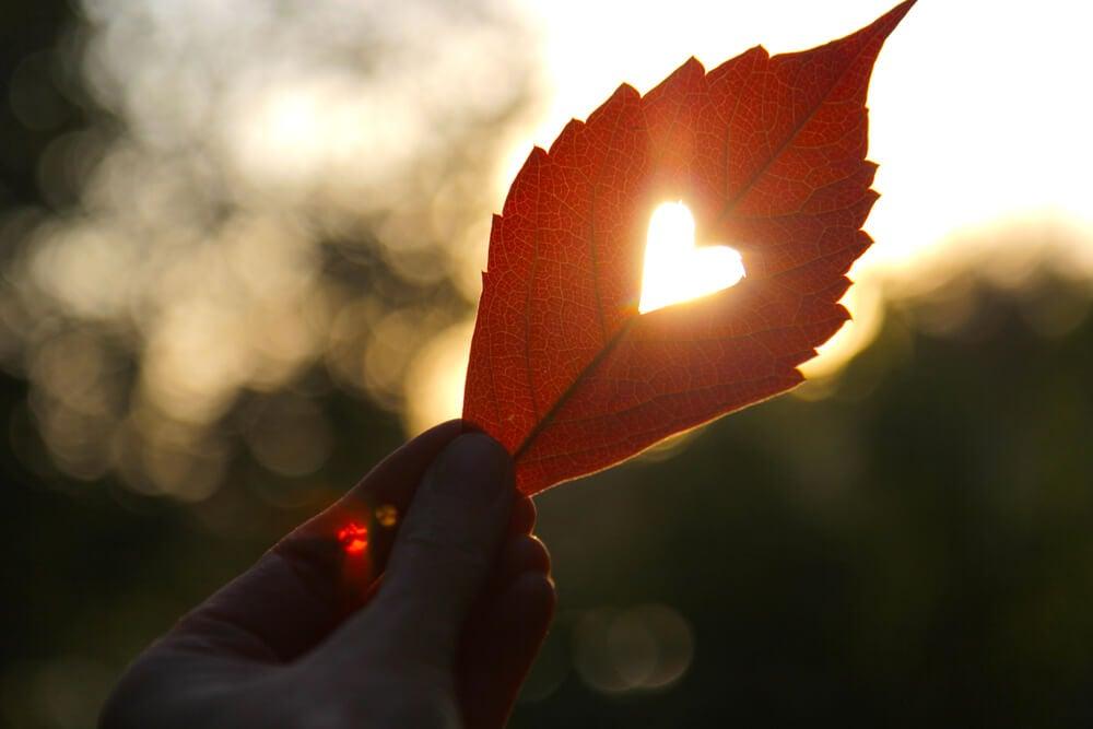 Hoja con forma de corazón el amor de tu vida