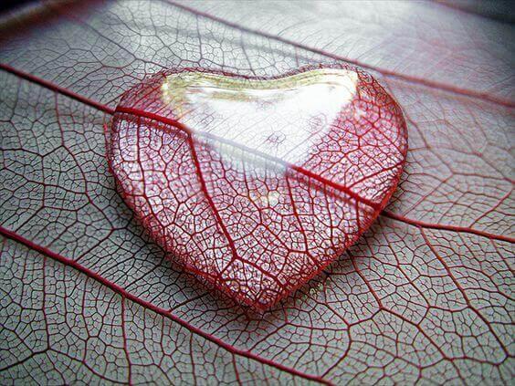 Amor líquido, lágrima en una hoja