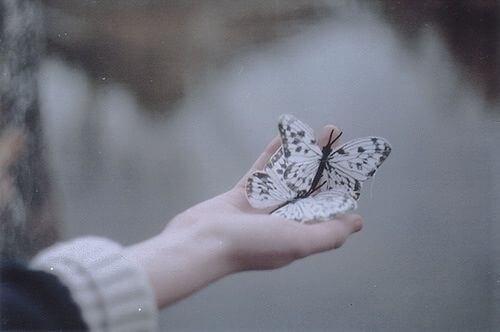 Mano con una mariposa simbolizando el Dharma